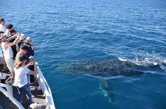 Crucero de observación de ballenas en...