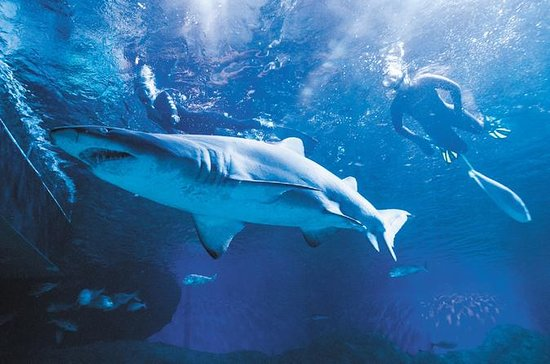 AQWA: 2-Hour Snorkel with Sharks...