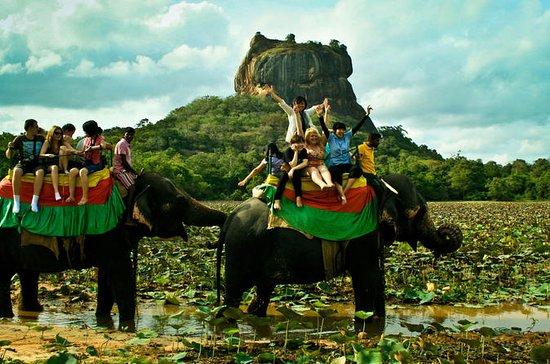 Ganztägige Tour zum Sigiriya Lions...