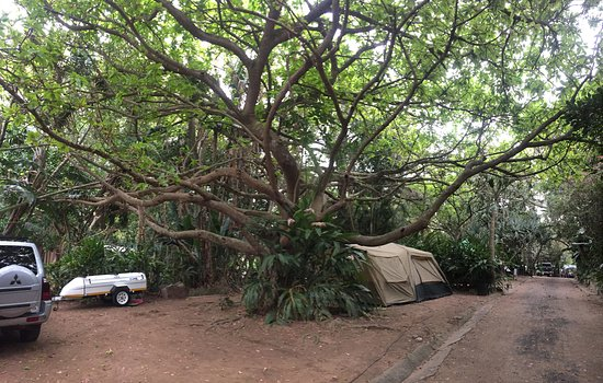 Zinkwazi Beach, Republika Południowej Afryki: Camping area