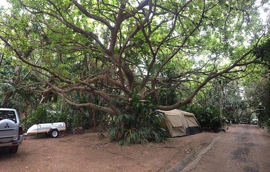 Zinkwazi Beach, Dél-Afrika: Camping area