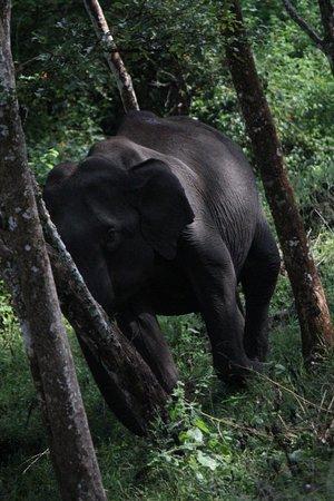 Waterwoods lodge and resorts Kabini: Safari