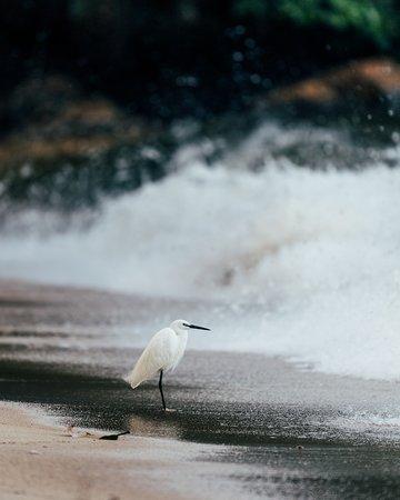 Rubondo Island, Tansania: Egret