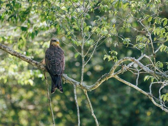 Rubondo Island, Tansania: Kite in Lodge