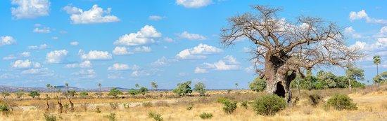 Национальный парк Руаха, Танзания: Scenic