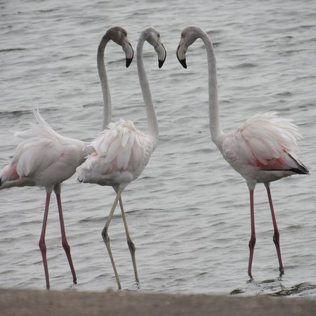 写真Walvis Bay Waterfront枚