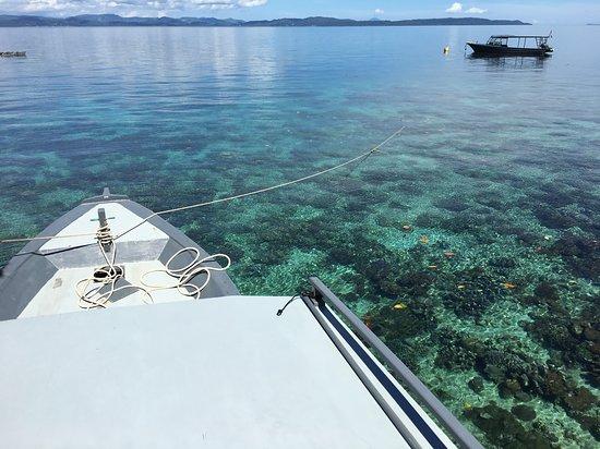 Снимок Coral Eye