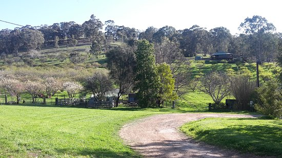 Wirrabara, Αυστραλία: View from driveway towards Ruby Cottage