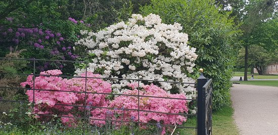 Beautiful Flowering Shrubs Picture Of National Trust Cliveden