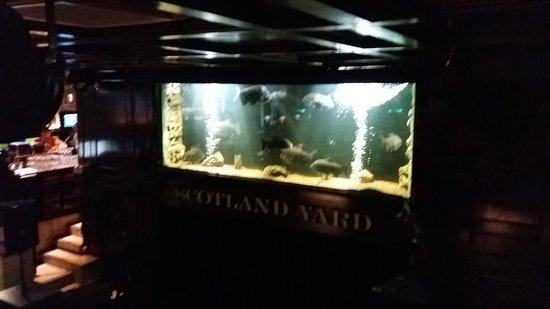 Scotland Yardin Upea Akvaario