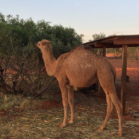 Erldunda, Australien: photo5.jpg