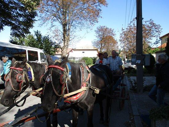 Balgarevo, Bulgarije: Kutschfahrt bei Bauernhochzeit
