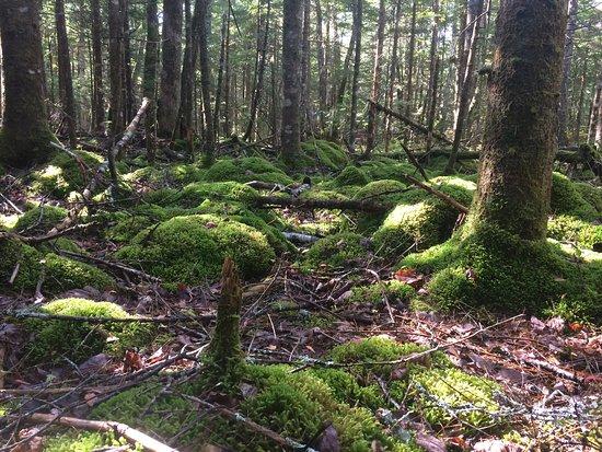 Kejimkujik National Park, Canada: лесной пейзаж