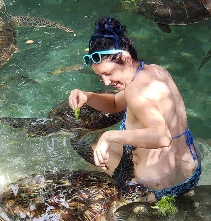 Mnarani Marine Turtles Conservation Pond: IMG_20181001_103908_948_large.jpg