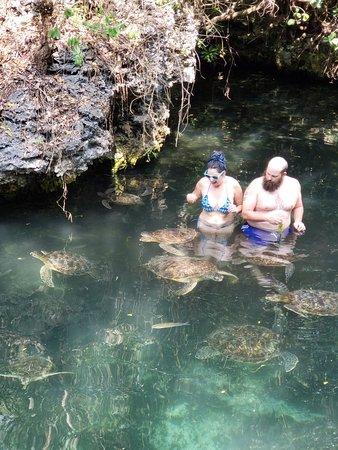 Mnarani Marine Turtles Conservation Pond: 20181001_092518_large.jpg