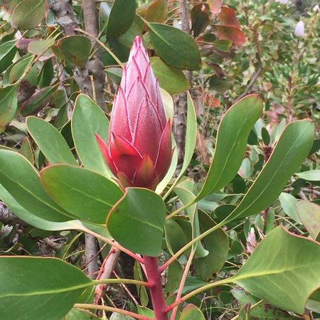 National Rhododendron Gardens: photo5.jpg