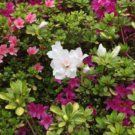 National Rhododendron Gardens: photo7.jpg
