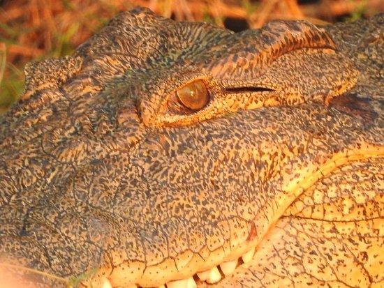 Zambezi National Park, ซิมบับเว: Crocodile on the Zambezi