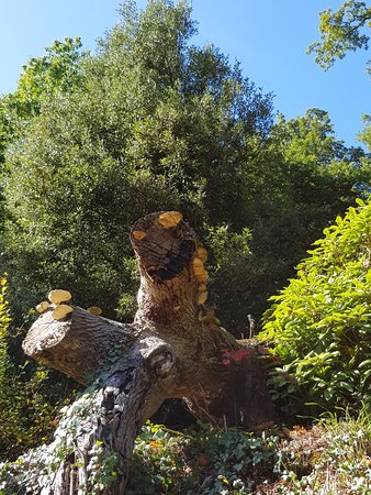 Trebah Garden: 20180924_111333_large.jpg