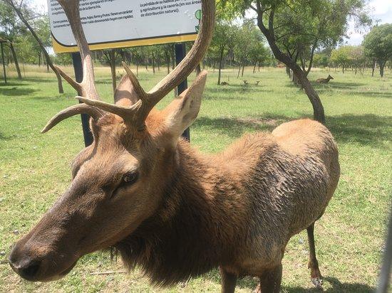 Aguascalientes, México: Up close to the animals