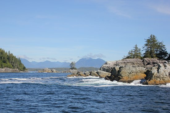 Archipelago Wildlife Cruises: Typical view of the islands and coastline