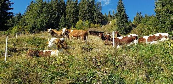 Hopfgarten in Defereggen, Oostenrijk: 20180929_160440_large.jpg