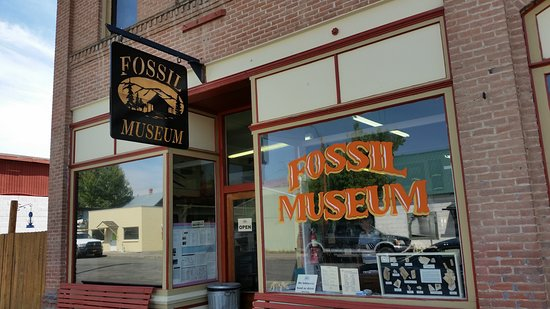 The Fossil Museum