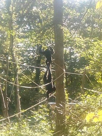 Manor Wildlife Park: Chimps