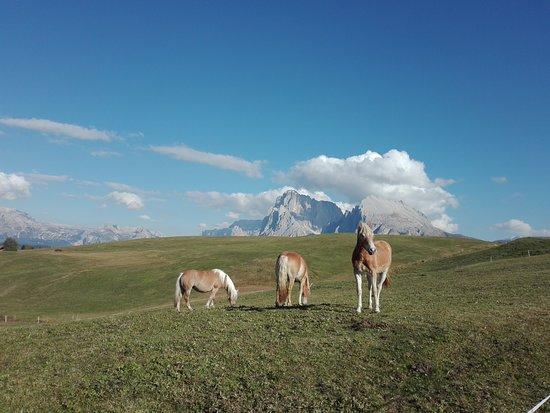 Cabinovia Alpe di Siusi