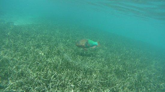 Roatan Divers: DSC00143_large.jpg