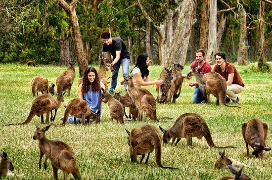 Volle dag wildlife en historische ...