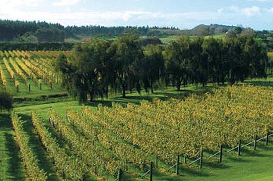 Volcanoes, Vines & Wines Day Tour fra...