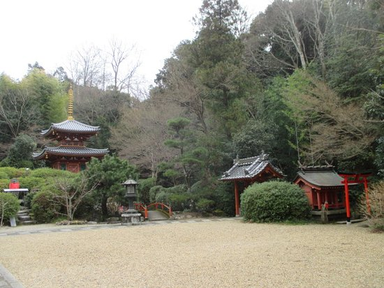 Sakurai Photo