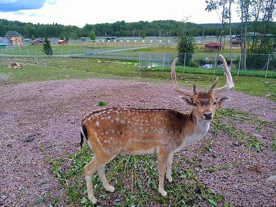 Karelian Zoo