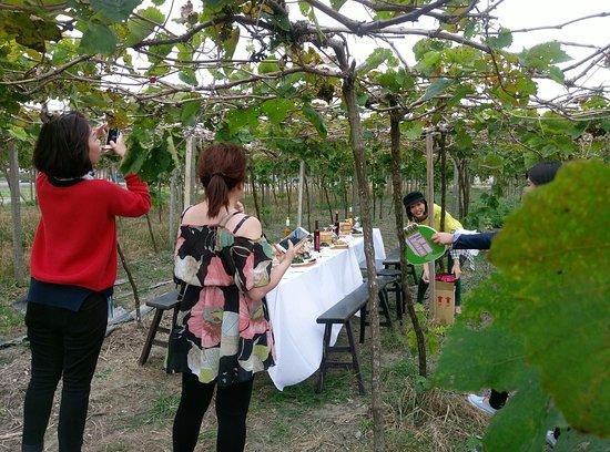 Erlin, Changhua: 在葡萄園下野餐,非常限定&非常預約。