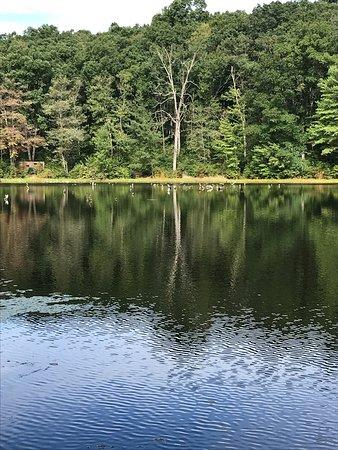 Drums, Пенсильвания: Lake Frances