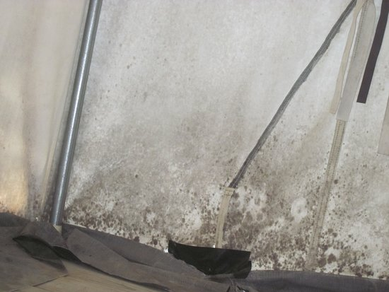 Troy, MO: Close up of dirt/mold on inside of platform tent.