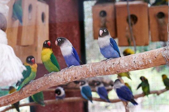 Dar Ayniwen Garden Hotel & Bird Zoo : Bird zoo
