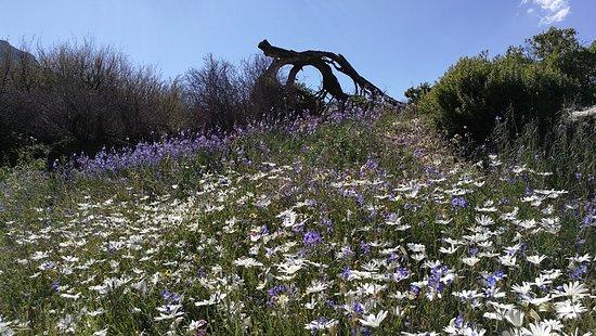 Cederberg, Südafrika: flowers everywhere