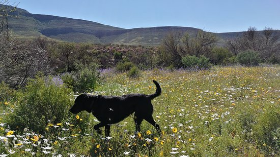 Cederberg, แอฟริกาใต้: the wonderful landscape and Tinca the lovely dog of the owner Andrea