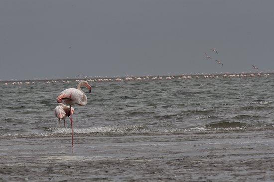 写真Sandwich Harbour 4x4枚