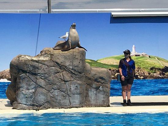 Pet Porpoise Pool - Dolphin Marine Magic Photo