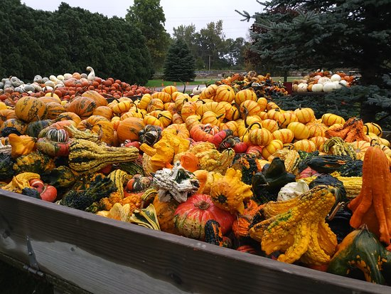 Saginaw, MI: Pumpkins galore!