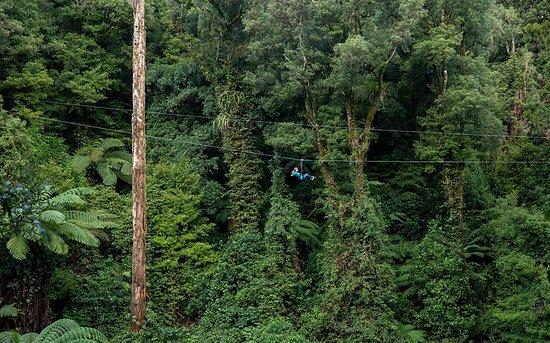 Rotorua Canopy Tours: Original Canopy Tour Ziplining