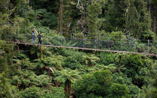 Rotorua Canopy Tours: Swing Bridge in native forest