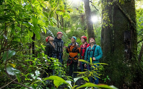 Rotorua Canopy Tours: Conservation talk with knowledgeable guides