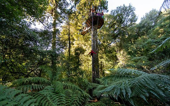 Rotorua Canopy Tours: Controlled Decent on the Ultimate Canopy Tour