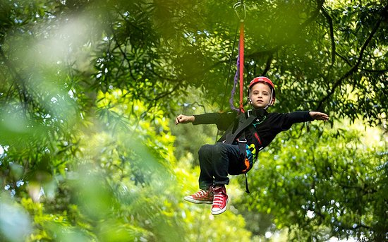 Rotorua Canopy Tours: Great kids activity - Original Canopy Tour