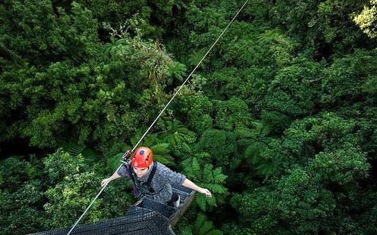 Rotorua Canopy Tours: Backwards fall on the 220m zipline