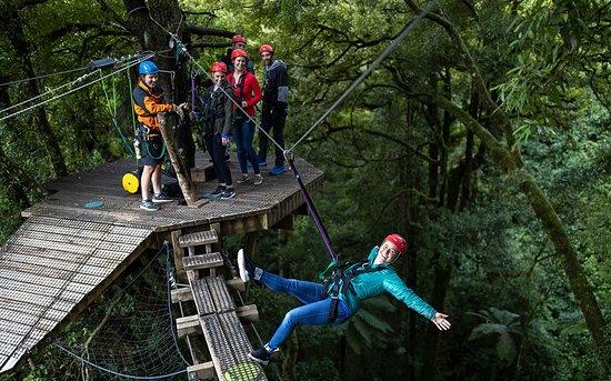Rotorua Canopy Tours: Swing Bridge - Original Canopy Tour